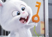 "Filmszene aus ""Pets"" | Bild: UPI"