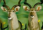 "Filmszene aus ""Safari"" | Bild: Neue Visionen"