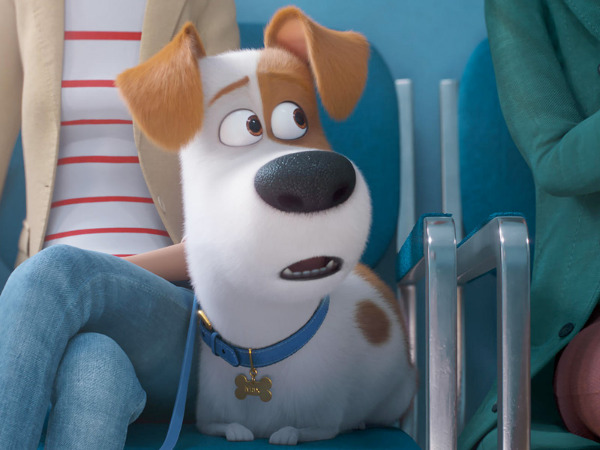 "Filmszene aus ""Pets 2"" | Bild: Universal"