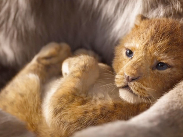 "Szenenbild aus ""The Lion King"" | Bild: Disney"