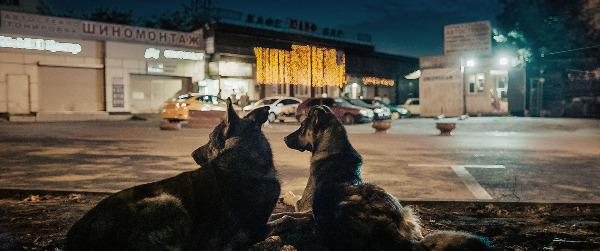 "Szenenbild aus ""Space Dogs"" | Bild: Real Fiction"